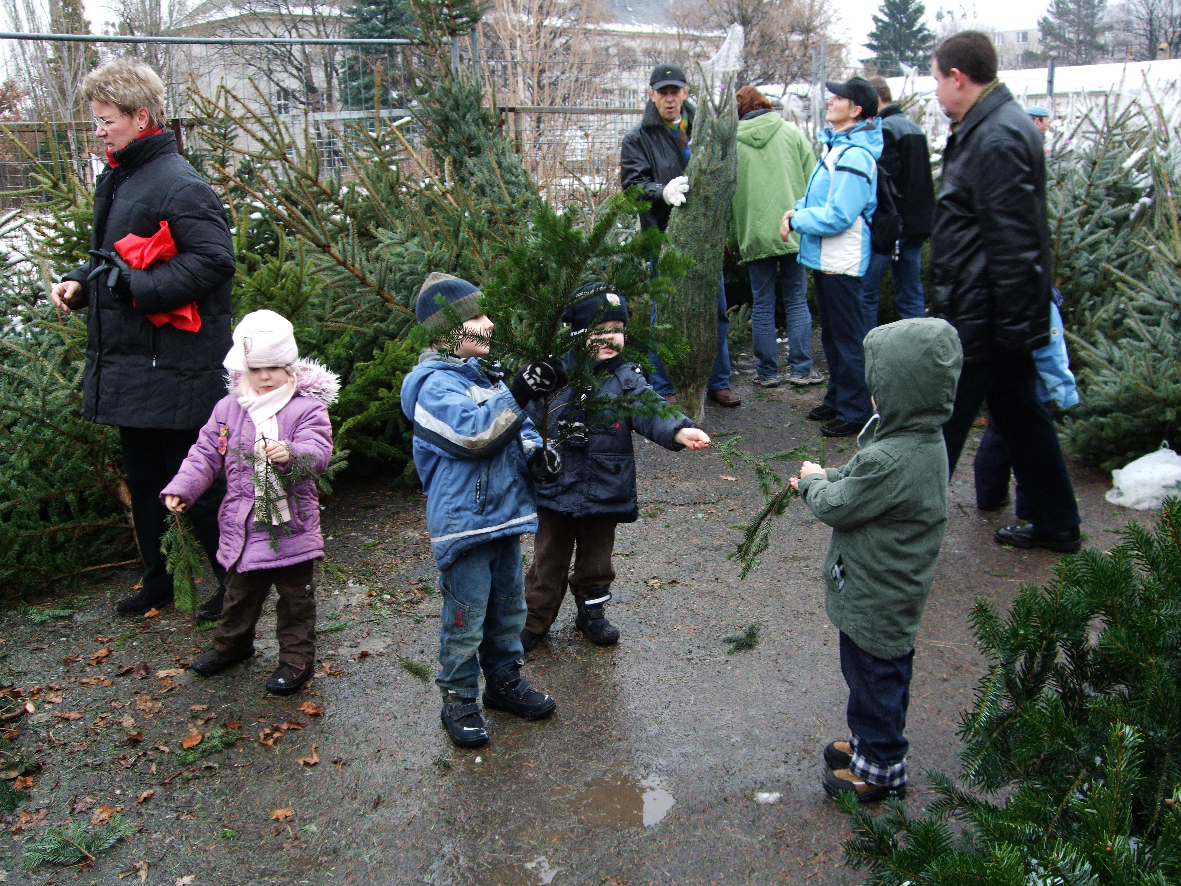 Weihnachtsbaum Kaufen Chemnitz.Weihnachtsbäume Gärtnerei Süß
